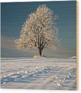 Frosty Oak Tree Wood Print