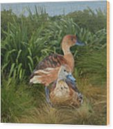 Fulvous Whistling Ducks  Wood Print