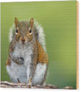 Funny Image From Wild Nature. Gray Wood Print