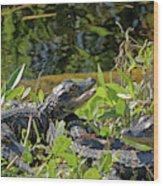 Gator Brood Wood Print