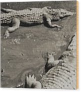 Gator  Park Residence Wood Print