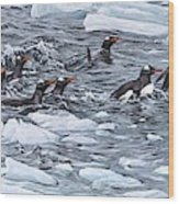 Gentoo Penguins By Alan M Hunt Wood Print