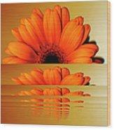 Gerbera Flower As Rising Sun Wood Print