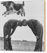 German Shepherd Jumping During Military Wood Print
