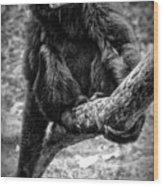 Gibbon Wood Print