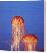 Glowing Jellyfish Under Water Wood Print