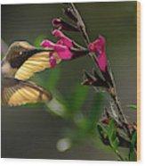 Glowing Wings Of A Hummingbird Wood Print