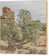 Gnarled Juniper Trees Against Red Sandstone Wood Print