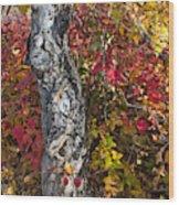 Gnarled Tree Trunk - Dezadeash Lake - Yukon Territory  Wood Print