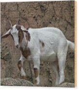 Goat Print 9245 Wood Print
