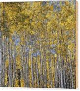 Golden Aspen Grove Wood Print