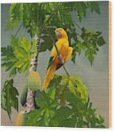 Golden Parakeet In Papaya Tree Wood Print