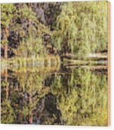 Golden Shevlin Park Wood Print