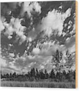Good Harbor Shoreline Black And White Wood Print