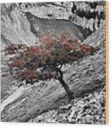 Gordale Scar Tree Wood Print