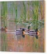 Got My Ducks In A Row Wood Print