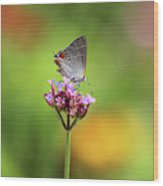 Gray Hairstreak Butterfly In Summer Wood Print
