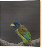 Great barbet Wood Print