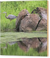 Great Blue Heron And Boulder Wood Print