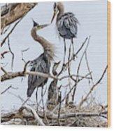 Great Blue Heron Rookery 4 Wood Print