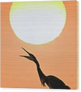 Great Blue Heron, Screeching, Sunset Wood Print