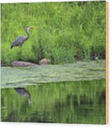 Great Blue Heron Square Wood Print