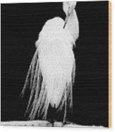 Great Egret In Full Bloom II Wood Print