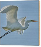 Great Egret, Yolo County California Wood Print