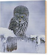 Great Gray Owl In Winter, North America Wood Print