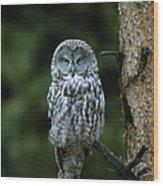Great Gray Owl Strix Nebulosa On Perch Wood Print