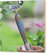 Great Tit Standing On A Garden Trowel  Wood Print