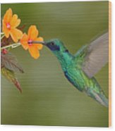 Green And Blue Hummingbird Sparkling Wood Print