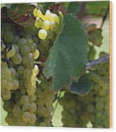 Green Grapes On The Vine 10 Wood Print