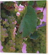 Green Grapes On The Vine 12 Wood Print