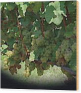 Green Grapes On The Vine 16 Wood Print