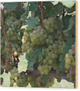 Green Grapes On The Vine 18 Wood Print