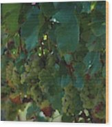 Green Grapes On The Vine 4 Wood Print