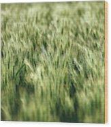 Green Growing Wheat Wood Print