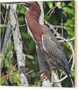 Green Heron In The Glades Wood Print
