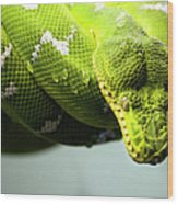 Green Snake Curled And Resting Wood Print