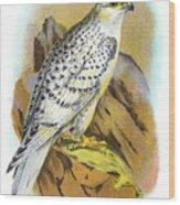 Greenland Falcon Engraving 1896 Wood Print