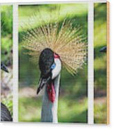 Grey Crowned Crane Gulf Shores Al Collage 2 Triptych Wood Print