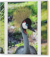 Grey Crowned Crane Gulf Shores Al Collage 6 Triptych Wood Print