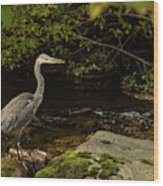 Grey Heron Fishing Wood Print
