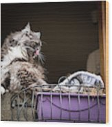 Grey Long Haired Cat Sitting On A Window Sill Wood Print