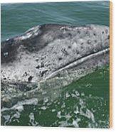 Grey Whale Head Wood Print