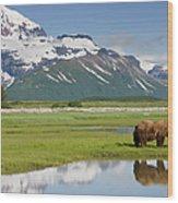 Grizzly Bear, Katmai National Park Wood Print