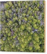 Grove Of Pines Aerial Wood Print
