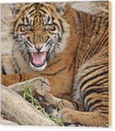 Growling Tiger Wood Print