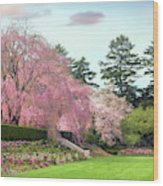 Weeping Cherry And Tulips Wood Print